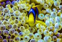 Art of Scuba Diving / Scuba dive, underwater photography, marine life, fish, ship wrecks, snorkeling, ocean life, macro critters and nature. All things for ocean lovers.