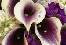 Trending Purple: Rhapsody! / by Moses Jewelers