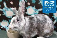 Rabbits for Adoption!