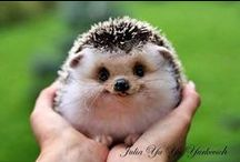Cute animals / They are just soooo cute. I hope you enjoy looking at them