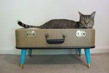 DIY for your pets / DIY projects for your dog, cat, or other four-legged friend!