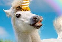 Unicorns ♥ / PINK FLUFFY UNICORNS DANCING ON RAINBOWS