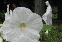 Mary's Garden / Ideas for creating a garden for the Virgin Mary or for creating a rosary garden.