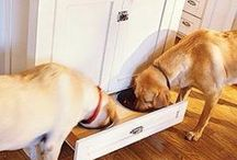 Furry Friends / The coolest ideas for our four-legged family members