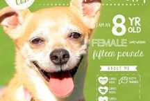 Amazing Foster Dogs! / Check out these fantastic foster dogs for adoption! Humane Society Silicon Valley Milpitas California