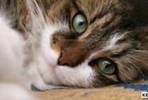 Miaou / #Chat #Cat #Kedi