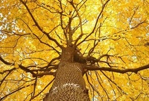 """We Like Trees / Just ask our own """"Talking Tree"""""""