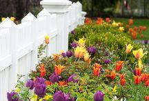Garden , Bahçe