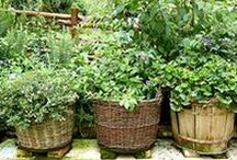 Gardens / Get inspired to plant your own garden with these beautiful vegetable and flower gardens, planting tips and tricks, gardening essentials and advice.