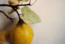 The Beauty of Fruit / In celebration of the beauty of fruit we share a collection of stunning still life photos