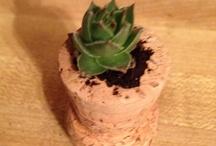 Plants / by Mom's Zen