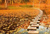 Steps ╭⊰✿ / Steps