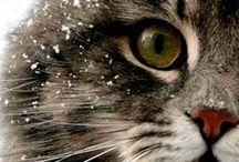 Кошки / Кошки – милые существа, эффективное лекарство от депрессии и лучшие друзья :3