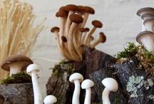 Mushrooms - Houbičky