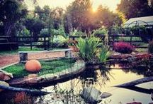 Home delights  / Pins about home life, local arts and culture, beautiful gardens and community.