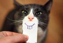 <3 Cats !!