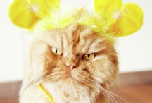 Funny Cats / Funny cats and the goofy stuff they do.  LOL cats!