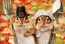 Fur the Holidays / Cute and funny animals celebrating the holidays. Christmas, Easter, Halloween, Thanksgiving