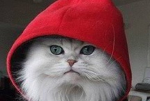 Cat Couture / Cats in clothes.  High Cat fashions.