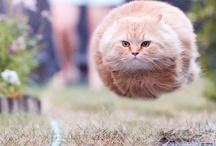 Furtastic Action Shots / Animal Action Shots...especially cats.