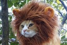 Meowloween Cats / Halloween cats.