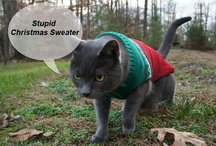Cats at Christmas - Merry Catmas / Christmas Cats.