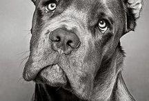собакины