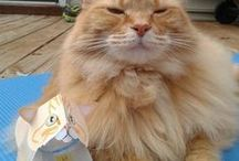 Cat Crafts - DIY Cats / Cat paper crafts and Do it yourself things for cats.