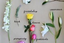 Fleurs / by Nancy Foley