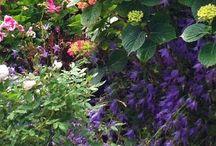 Tuinieren thuis / Onze eigen tuin onderhouden !
