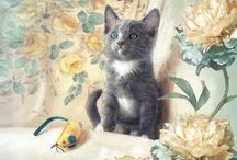 Dianne Woods Cat Art