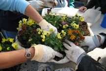 Horticulture Therapy / Horticulture therapy is a signature component of our holistic approach to recovery.