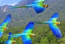 Beautiful parrots / by Tiger Lily