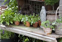 Potting shed and tables.