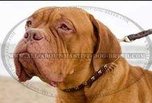 #Mastiffs wearing cool #gear / Lovely Mastiffs wearing stylish Collars, Harnesses and Muzzles