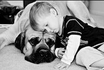 Old #English #Mastiff / This bord is devoted to Old English Mastiff breed.