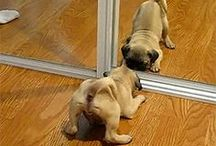 Funny and  funniest! / Sometimes Dogs can be very amusing...