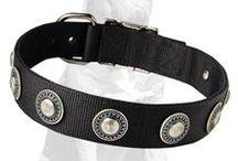 #Mastiff Royal #collars  / Luxurious #collars to make your #Mastiff look fabulous!
