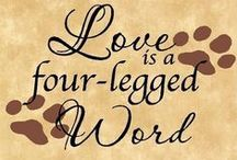 #DOGS = #LOVE / How we love our four legged friends)))