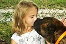 Show everyone #your #Mastiff! / You can add photos of your mastiff or mastiffs)