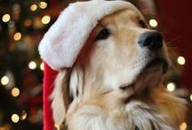 #Christmas and #Dogs / What Christmas without your four-legged friend? Lets pin beaitiful photos of your or just lovely christmas dogs)))