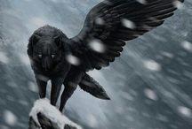 A͙ C͙O͙U͙R͙T͙ O͙F͙ W͙I͙N͙G͙S͙ A͙N͙D͙ P͙A͙W͙S͙ R͙P͙ / Place:Enchantamore. You can be a wolf, Cat, dog, wolf, magical horse, anything! Humans are allowed too.