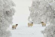 Winter / Winter, Schnee,