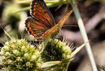 Macro insecten / Eigen foto's van Nathalie