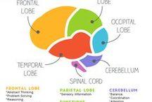 interesting brain info