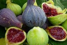 CUINA - FIGUES