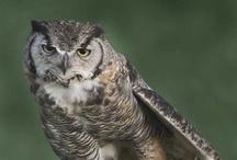 Wildlife! / by Willowrise LLC