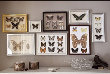 My home / Home decor