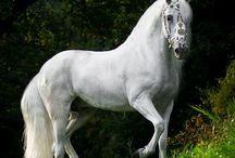 Horses / by Lisa Smith