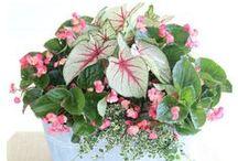 Gardening Tips & Ideas / Gardening tips, ideas, plans and tutorials